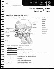 human anatomy and physiology lab manual review sheet 2 answers